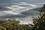 Morning mist near Mount Isobel